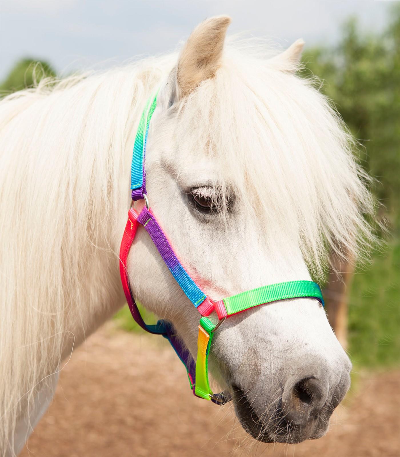 Halfter Regenbogen Shetty/Pony
