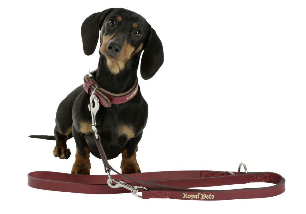 Halsband Royal Pets 30-38cm