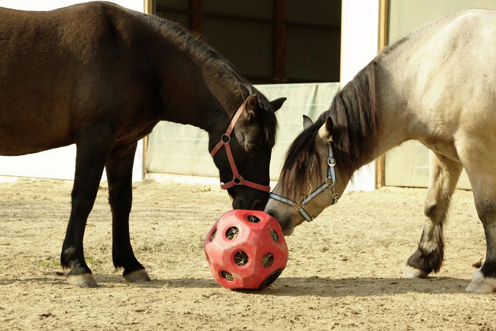 HeuBoy rot Futterspielball